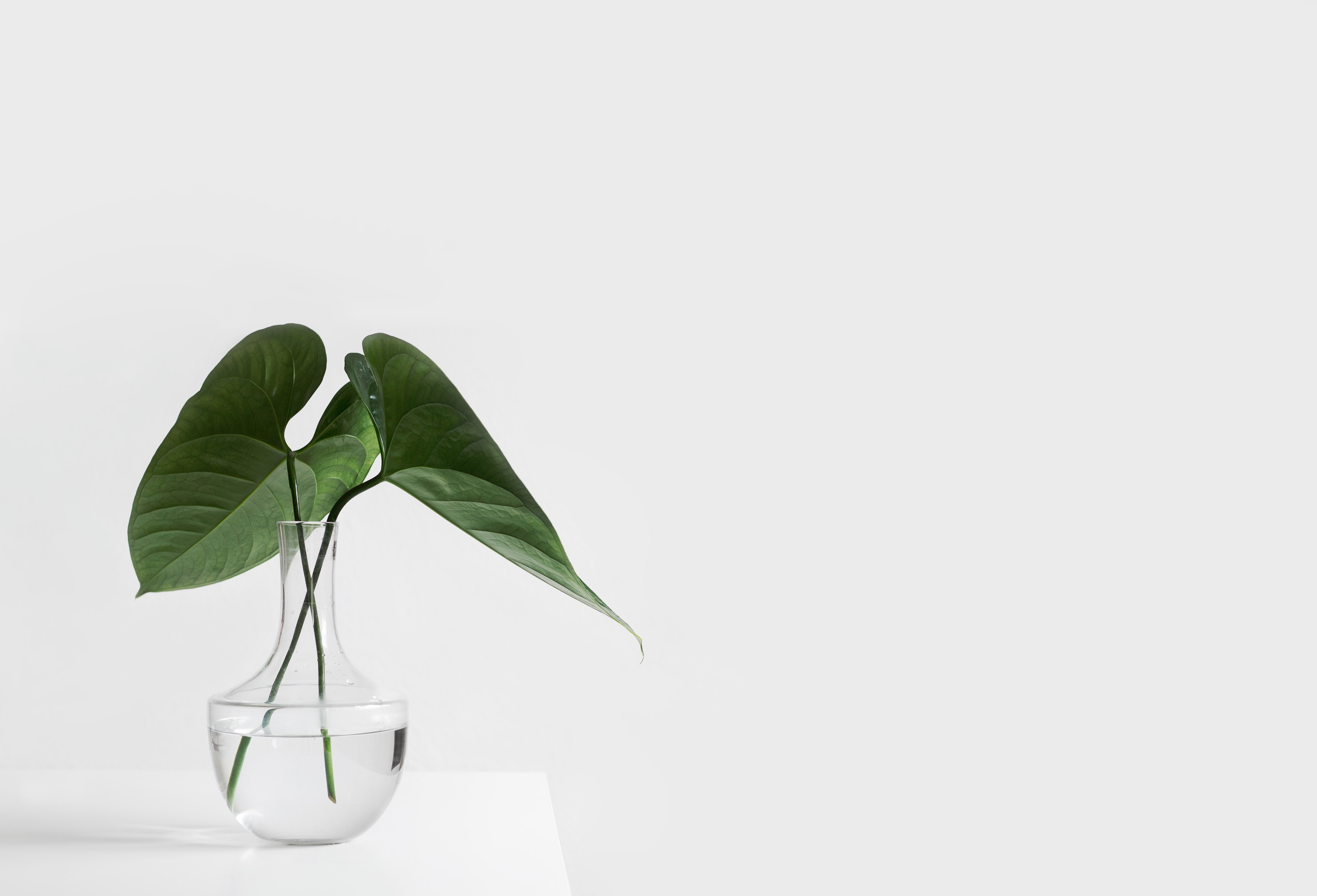 Green Span Go for Green: Make Insulated Metal Panels Part of a Sustainable Solution White Background Green Plant in Glass Vase